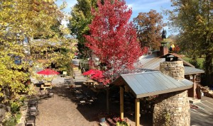 Vibrant fall foliage makes for a perfect backdrop at Hubba Hubba Smokehouse