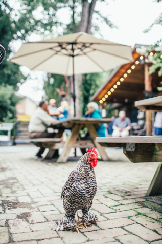 Chicken in the courtyard - Photo Credit: Sam Dean Photography